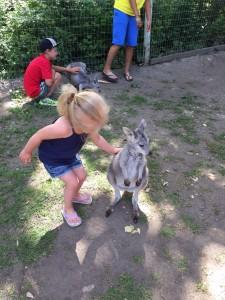 Kangaroo Creek Farm